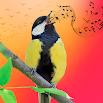 Best Bird Sounds, Calls & Ringtones 1.0.5