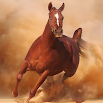 Horse Run 1.1.1