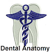 Dental Anatomy Plus 1.0.0