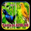 Canto de SEU AZULÃO 2.2