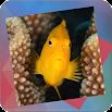 Déjà vu - Reef 1.0.10