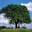 Hoe heet deze boom? NO ADS 1.9.2
