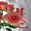 Pink Rose Butterfly LWP 830k