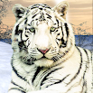 Wild White Tiger: Jungle Hunt 2021 5.0 and up
