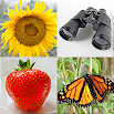 Guess Pictures and Words: Photo-Quiz with 5 Topics 3.1.0