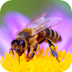 Bee Sounds 1.0