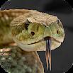 Rattlesnake Sounds 2.0