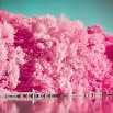 Analog Film Pink Camera-Palette,Photo editor,Paris 1.4