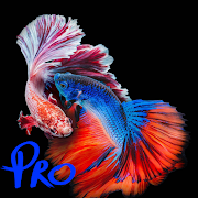 3D Betta Fish Wallpapers Pro 54_GG.512