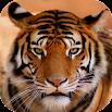 Tiger Sounds 2.0