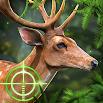 Deer Hunting 2021: Hunting Games Free