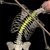 Posture by Muscle & Motion 2.3.3